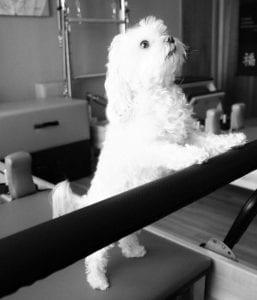 Fast Eddie: Dedicated Mascot at St Paul Pilates Studio
